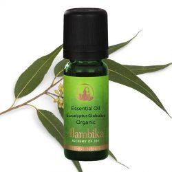 Eucalyptus Globulus Essential Oil, Org