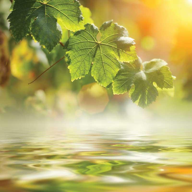 Essential-Oils-&-Aromatherapy